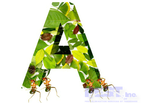 Ant Infestations in Homes are Typically Caused by These 4 Things